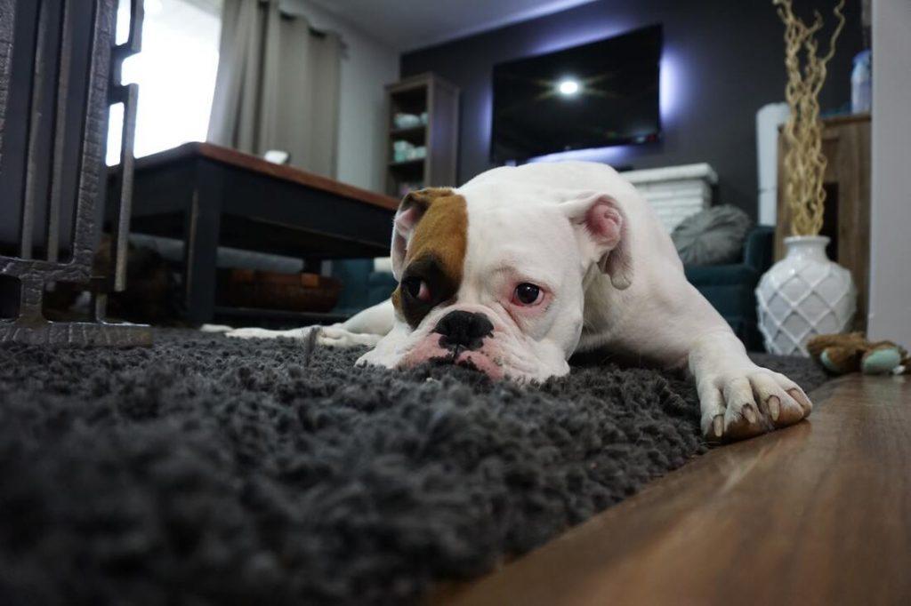 Pet Urine and Odor Removal
